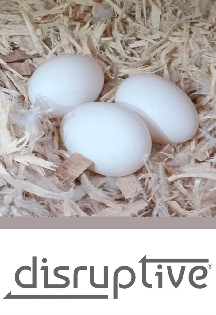 disruptive incubation psittacus catalonia