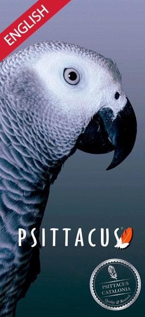 psittacus catalonia parrots