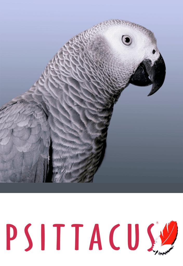 psittacus catalonia african grey parrot