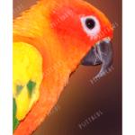 parrots Calcium Grit Fine