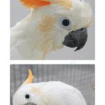 handrearing bird breeding